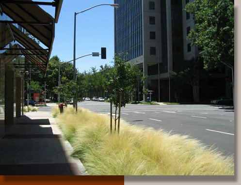 Sacramento Landscaping with Ornamental Grasses