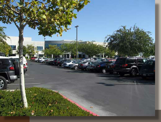 Parking Lot Trees to Meet Rancho Cordova Requirements