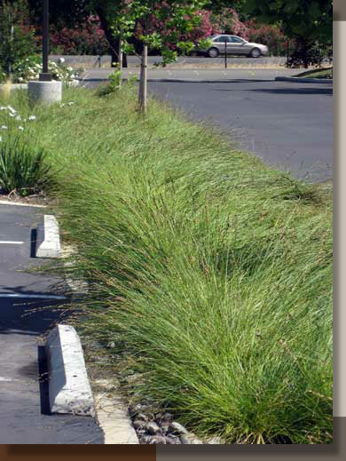 Water Quality Swale at West Yost Associates in Davis, California