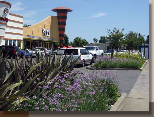 Rancho Cordova Landscaping That Stands Out