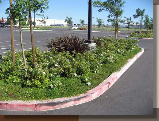 Parking Lot Planting Design at Dixon Tractor Supply