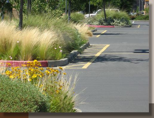 Cutting back ornamental grasses gr landscape architect feather grass at folsom gateway center workwithnaturefo
