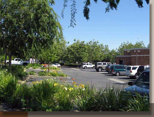 Bank of America, Roseville, CA Landscape Renovation