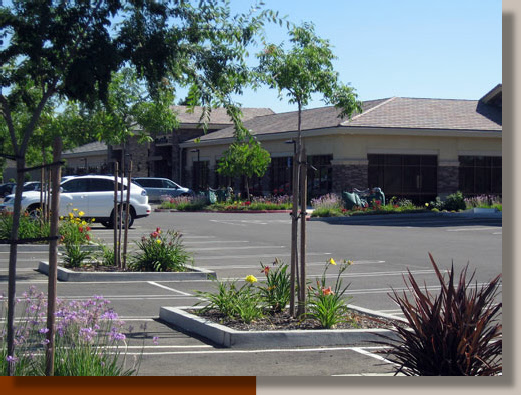 Daylilies Enhance Parking in Roseville, California