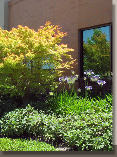 Planting Design for UC Davis Office, Elk Grove, California