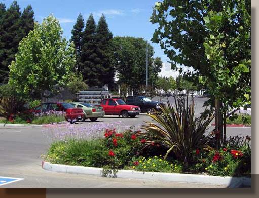 Vista Park Planting Design Sacramento California